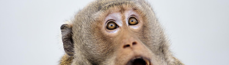 Monkey looking shocked